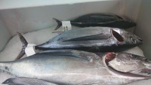 Conservation du thon